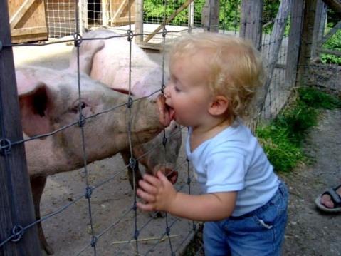 Porki
