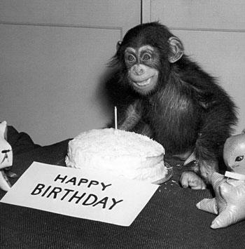 birthdaychimp